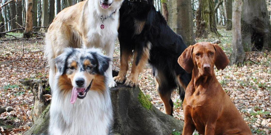 gut aussehend bestbewertet billig toller Rabatt für Neues Kursangebot: Anti-Jagd-Kurs – Hundeschule und ...